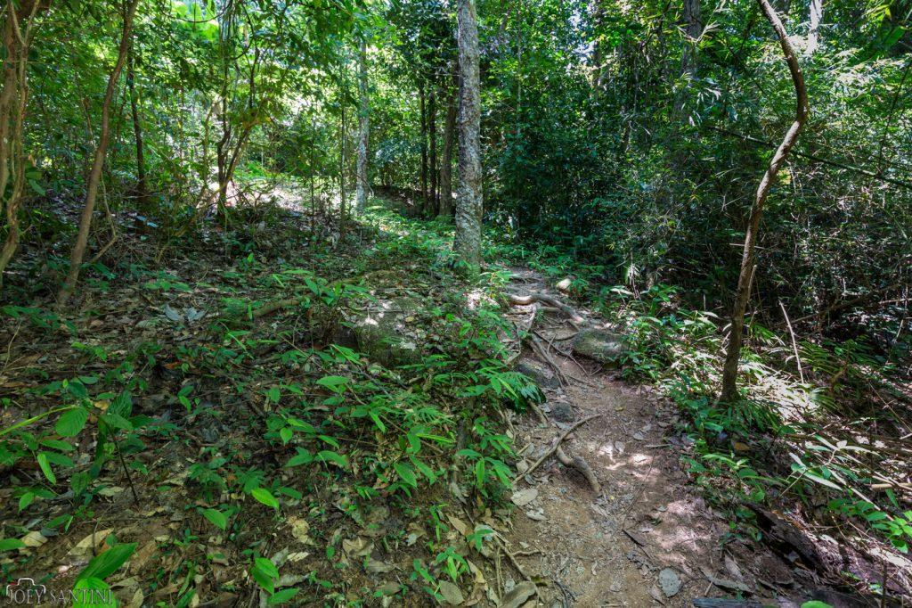 Climbing into the jungle