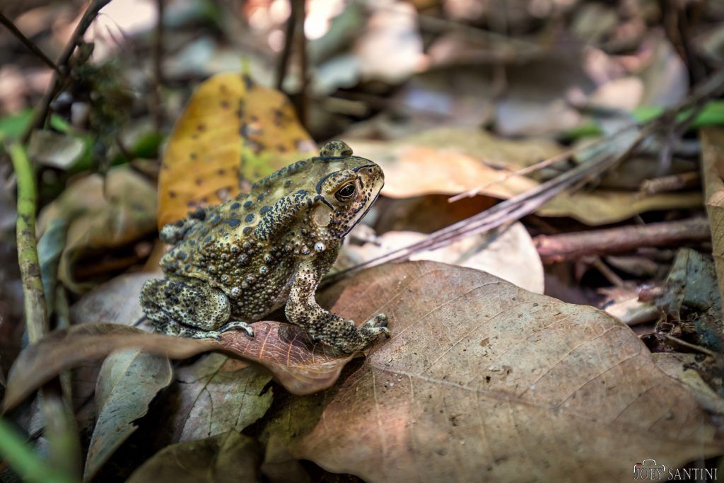 Colorful toad jungle.