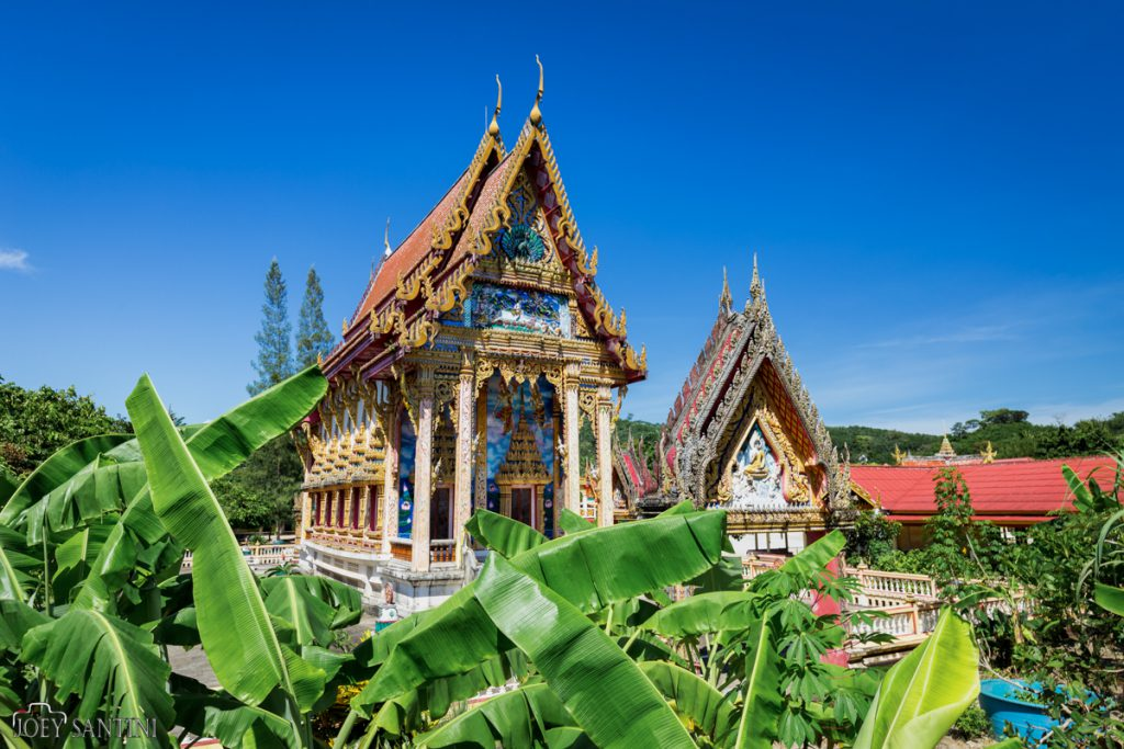 Banana threes garden of wat Na Klang