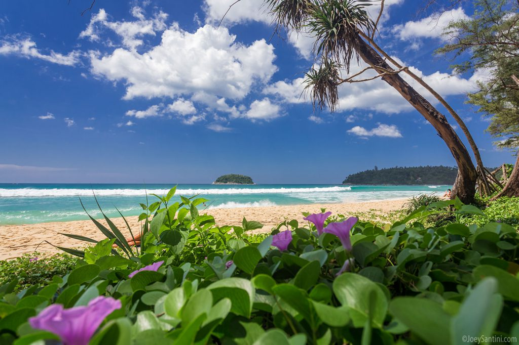 Violet flowers on Kata beach.
